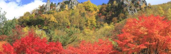 autumn hokkaido